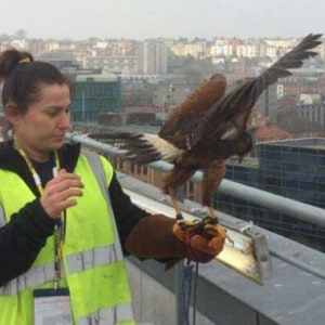 bird-control-2