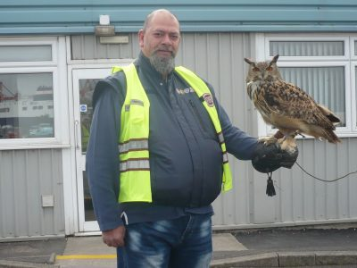 Yoda the European Eagle Owl at Portbury Royal Docks