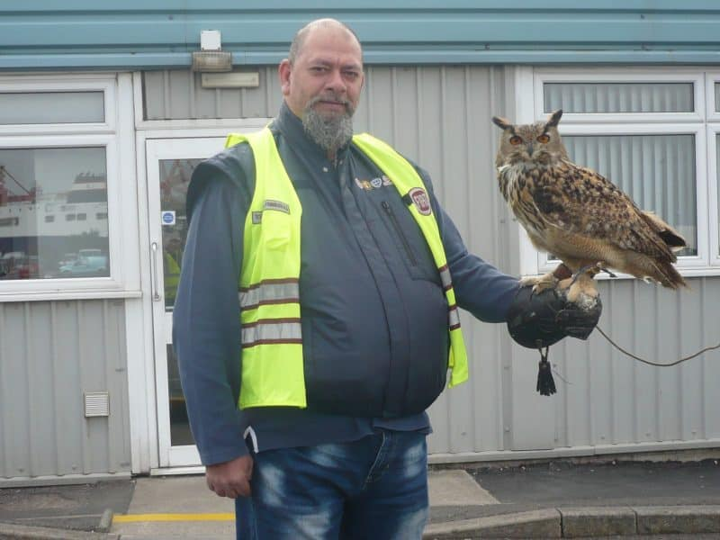 Yoda the European Eagle Owl at Portbury Royal Docks