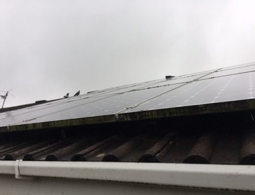Bristol Solar Panel Bird Proofing