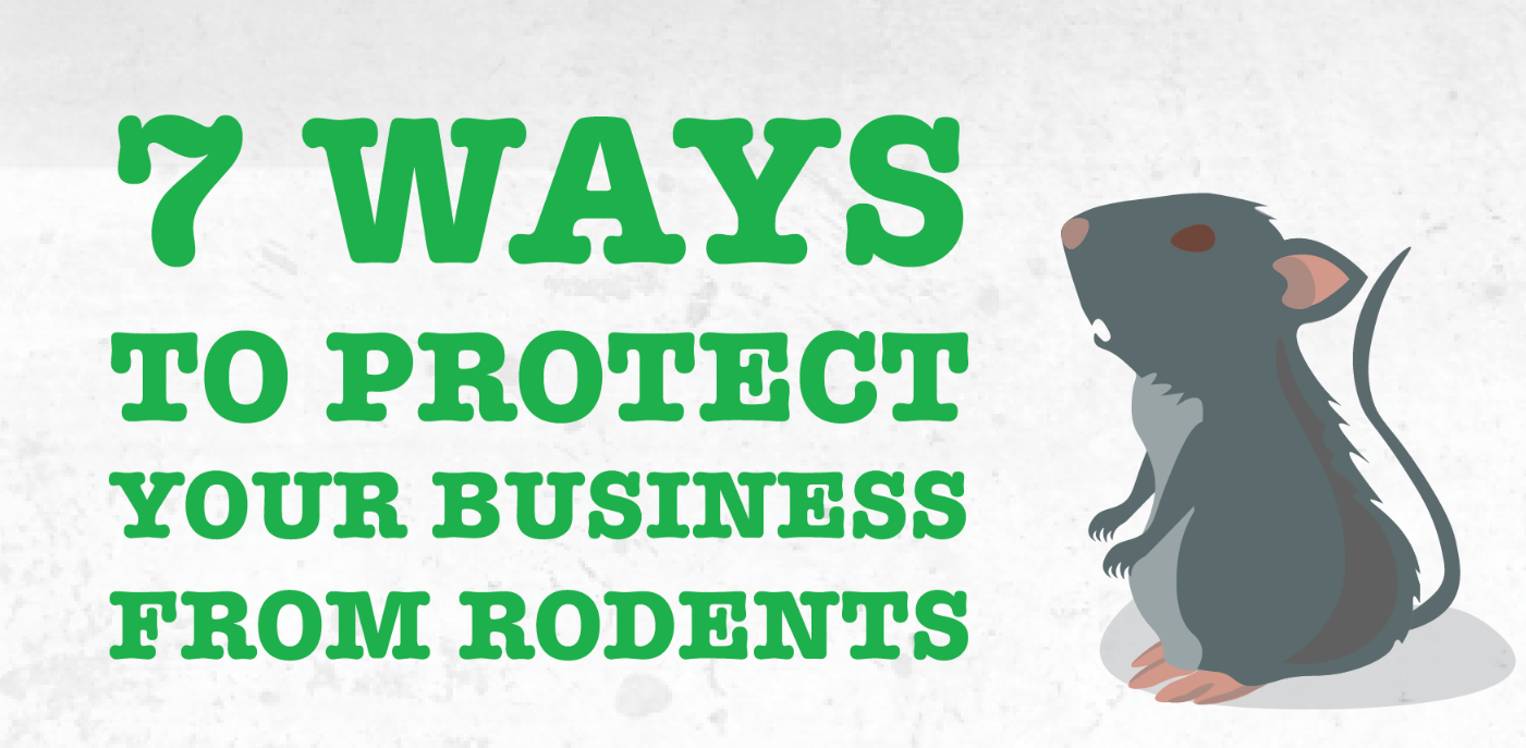 7 Ways to Protect Your Business From Rodents