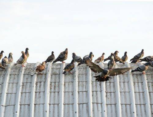 Bird Proofing Your Business